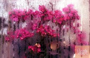 دلم را نذر آمدنت کردم باران ...